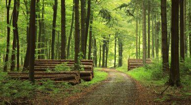 Fun Facts zur deutschen Forstlandschaft
